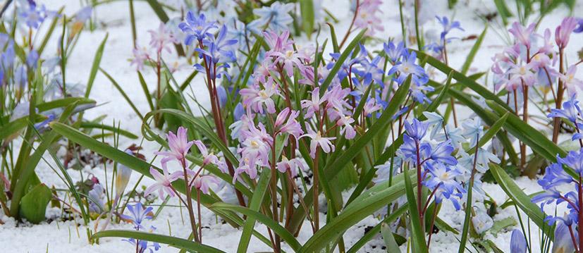Bijzondere bloembollen
