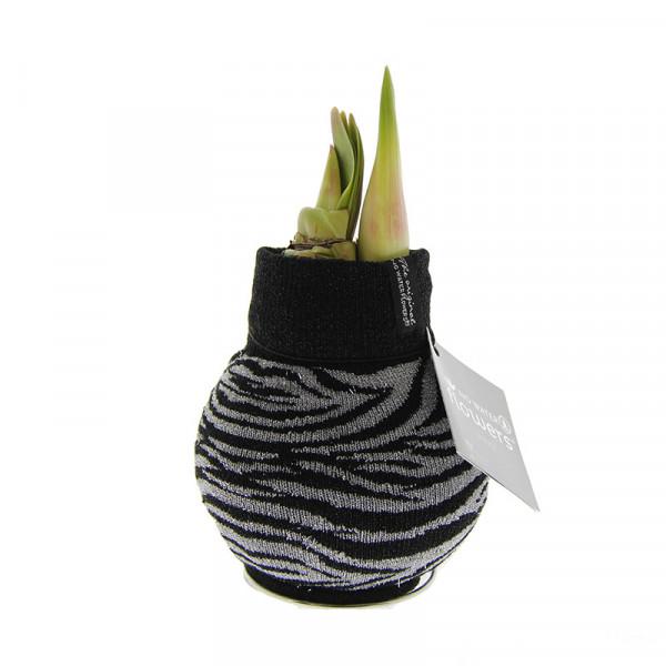 Wax Amaryllis Fashionz Zebra print
