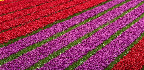 Weetjes-bloembollenwereld-thumb