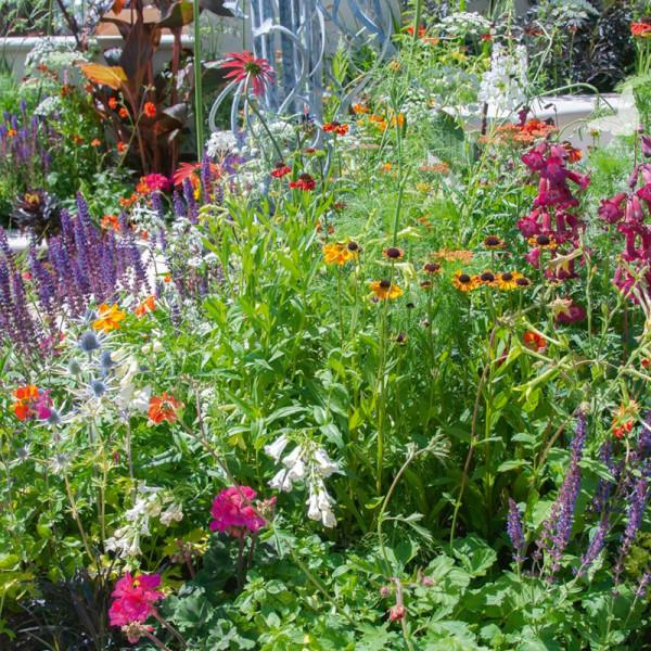Borderpakket voor een vlinder-vriendelijke tuin